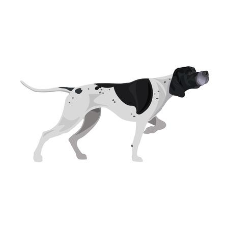 Puntero inglés en blanco y negro. Raza de perro arma. Ilustración de vector aislado sobre fondo blanco.