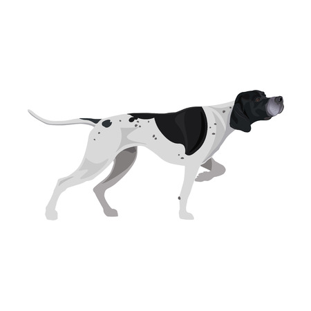 Black and white English pointer. Gun dog breed. Vector illustration isolated on the white background Illustration