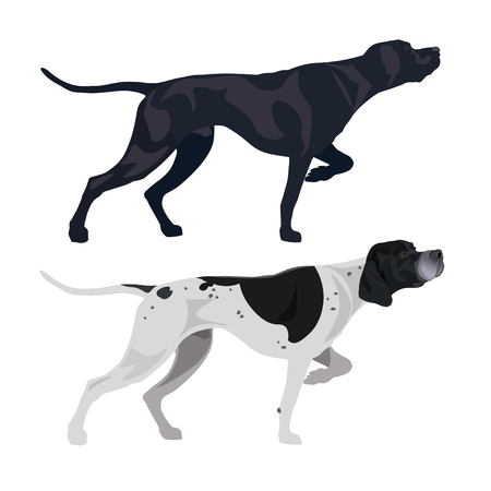 Punteros ingleses negros y manchados. Ilustración de vector aislado sobre fondo blanco.