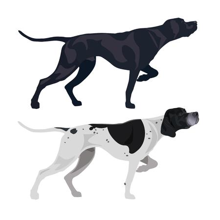 Schwarze und gefleckte englische Zeiger. Vektorillustration lokalisiert auf dem weißen Hintergrund