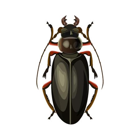 Titan beetle. Vector illustration isolated on white background Illustration