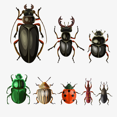 Set of different beetles. . Vector illustration isolated on white background