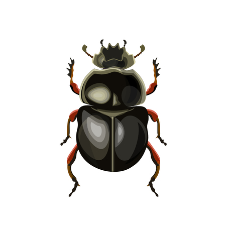 Sacred scarab beetle. Vector illustration isolated on white background