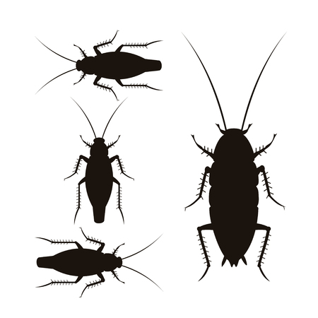 Set of vector silhouettes of oriental and german cockroaches. Illustration isolated on white background Ilustração