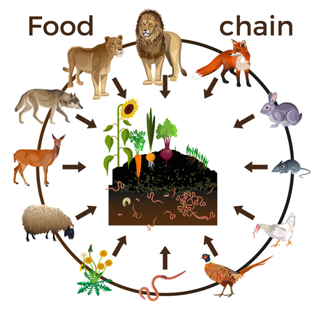 Food chain animals. Vector illustration isolated on white background
