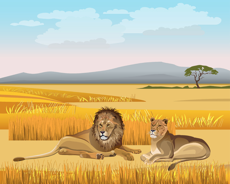The lioness and the male lion lay in the savanna against the background of the mountains. Vector illustration
