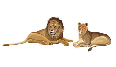 Lionne et lion mâle couché. Illustration vectorielle isolée sur fond blanc Vecteurs