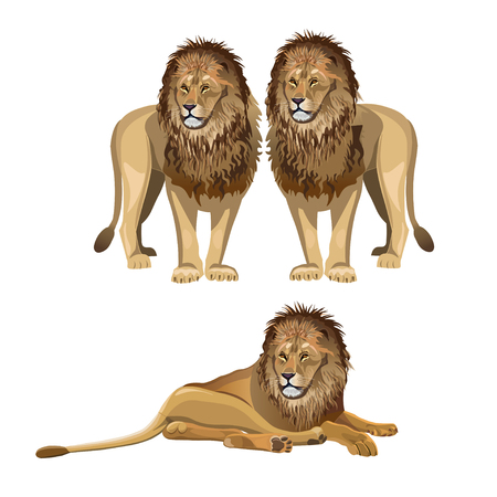 Various poses of a lion. Vector illustration isolated on white background Vetores