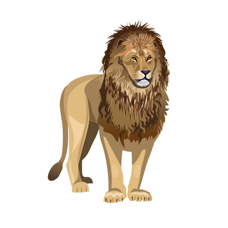 African lion standing in front. Vector illustration isolated on the white background