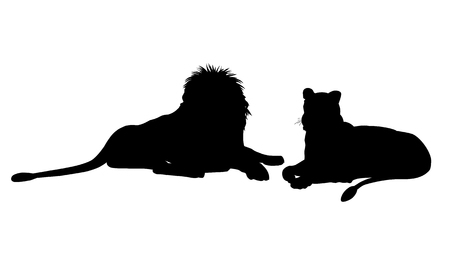 Silhouettes of lioness and male lion lying down. Vector illustration isolated on the white background