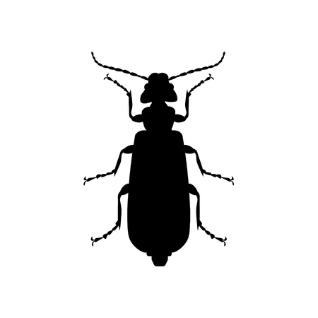 Silhouette of spanish fly. Blister beetle. Vector illustration isolated on white background