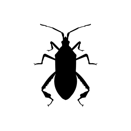 Silhouette of western conifer seed bug. Vector illustration isolated on white background