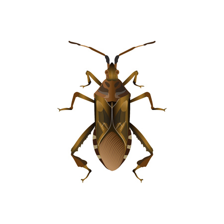 Western conifer seed bug. Vector illustration isolated on white background  イラスト・ベクター素材