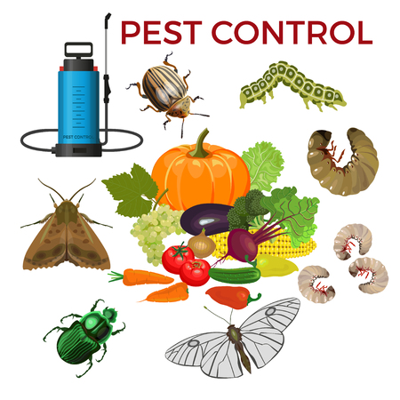 Pest control concept with insect pests, vegetables and sprayer. Vector illustration isolated on white background
