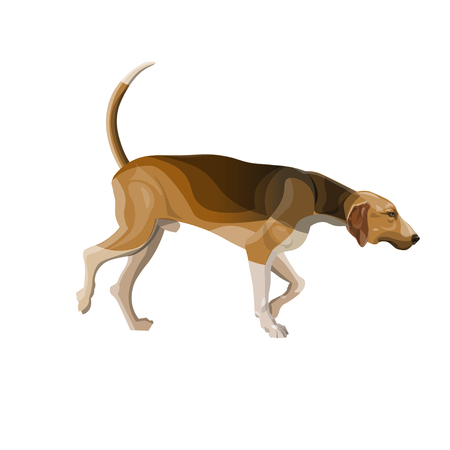 Hunting dog. Scent hound chasing prey. Vector illustration isolated on white background 일러스트