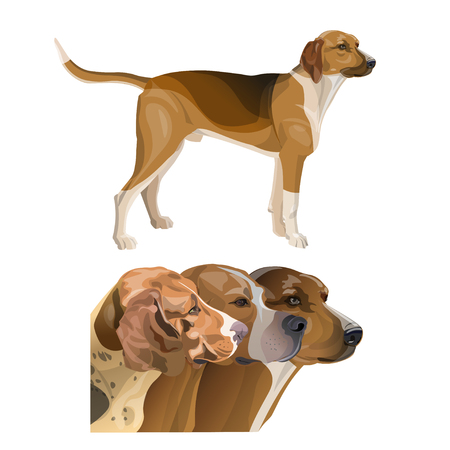 Set of hunting dog profile images. Scent hounds. Portraits of the head and full-length. Vector illustration isolated on white background