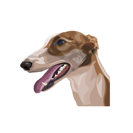 Portrait of sighthound dog. Front view in full growth. Vector illustration isolated on white background