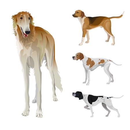 Set of hunting dog. Greyhound, scent hound, English pointer. Vector illustration isolated on white background