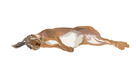 Hunting dead hare lying on its side. Vector illustration isolated on white background