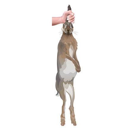 Main mâle tenant un lièvre ou un lapin par les oreilles. Illustration vectorielle isolée sur fond blanc Vecteurs