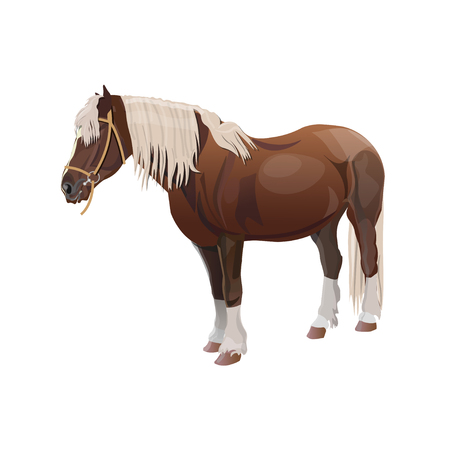 Bay shire draft horse. Vector illustration isolated on white background