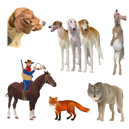 Hunting set with scent hound and sighthounds, rider, hunter, horn, hare, fox, wolf. Vector illustration isolated on white background Illustration