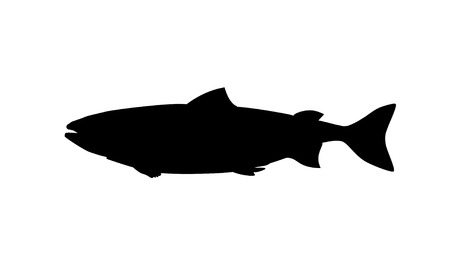 Silhouette of salmon fish. Vector illustration isolated on white background
