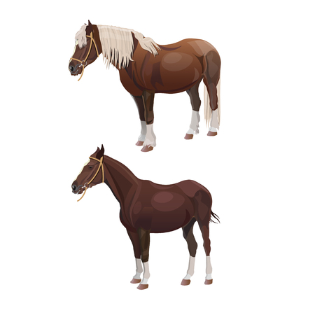 Riding and draft horses. Vector illustration isolated on white background Vectores