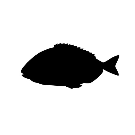 Silhouette of sea fish gilt-head bream. Vector illustration isolation on the white background