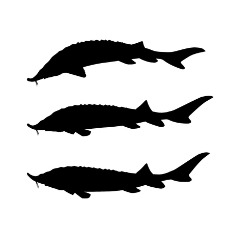 Set of silhouettes of sturgeon fish. Vector illustration isolated on black background Иллюстрация