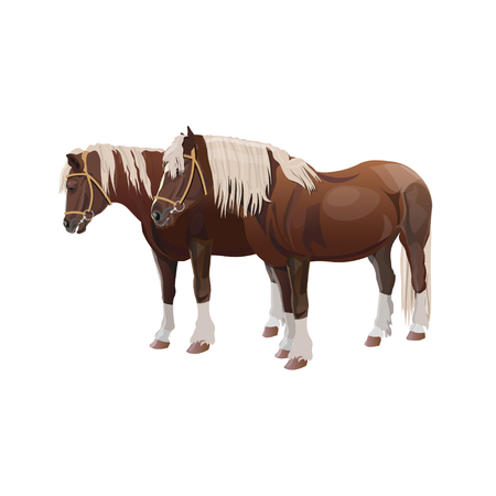 Pair of shire draft horses. Vector illustration isolated on white background