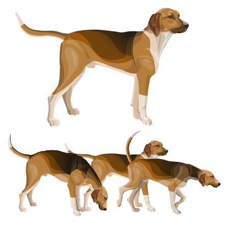 Hunting dog set. Scent hound breed. Vector illustration isolated on white background
