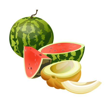 Melon and watermelon. Vector illustration isolated on white background