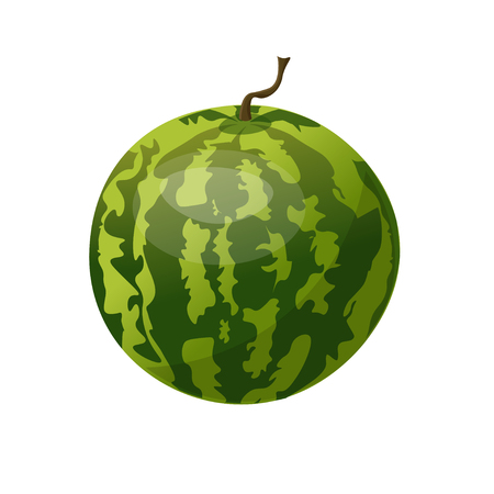 Whole watermelon. Vector illustration isolated on white background Illustration