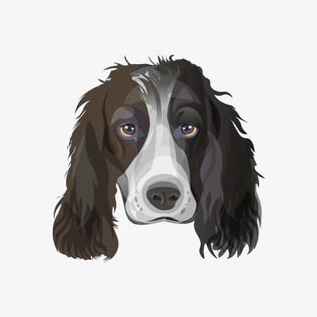 Portrait of English springer spaniel dog. Vector illustration isolated on white background