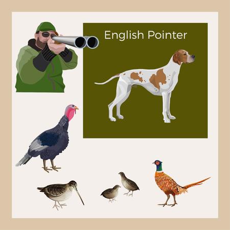 Hunting gun dog. Set of vector illustration with English pointer, hunter and game-bird: wild turkey, pheasant, quail, woodcock on white background  イラスト・ベクター素材