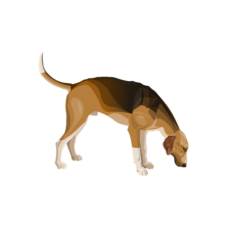 Sniffing hunting dog. Scent hound sideways in full growth. Vector illustration isolated on white background