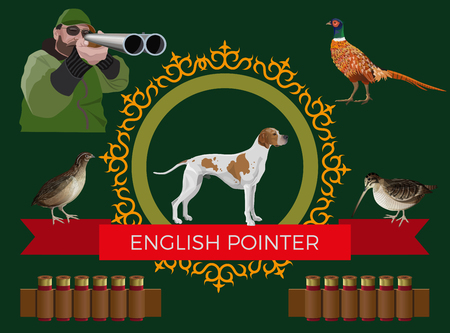 Hunting gun dog. Set of vector illustration with English pointer, hunter and game-bird: pheasant, quail and woodcock on dark background Vettoriali