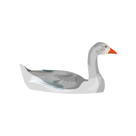 Grey domestic goose swimming. Side view. Vector illustration isolated on white background