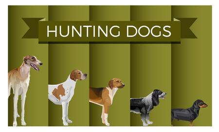 Insieme di vettore di cani da caccia in fila. Levriero, pointer, levriero, spaniel e bassotto. Illustrazione vettoriale