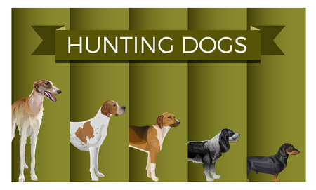 Vector set of standing in line hunting dogs. Greyhound, pointer, scent hound, spaniel and dachshund. Vector illustration