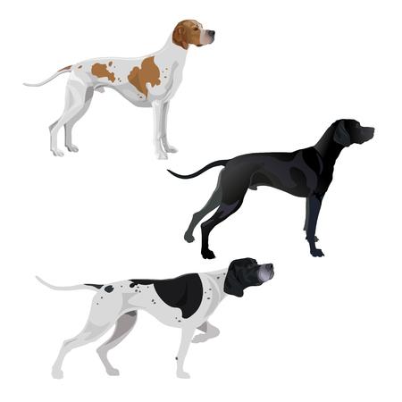Conjunto de perros pointer ingleses de diferentes colores de pelaje. Ilustración de vector aislado sobre fondo blanco.