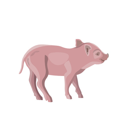 Domestic pink piglet. Vector illustration isolated on white background Illustration