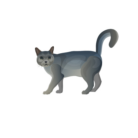Grey cat walking with tail up. Vector illustration isolated on white background