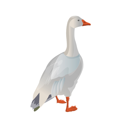 Standing white (snow) goose. Vector illustration isolated on white background Çizim