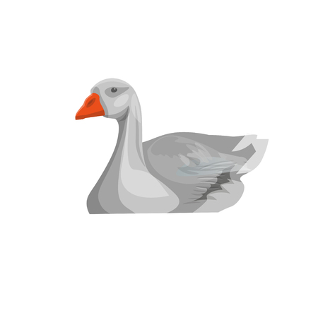 Grey domestic goose swimming. Front view. Vector illustration isolated on white background