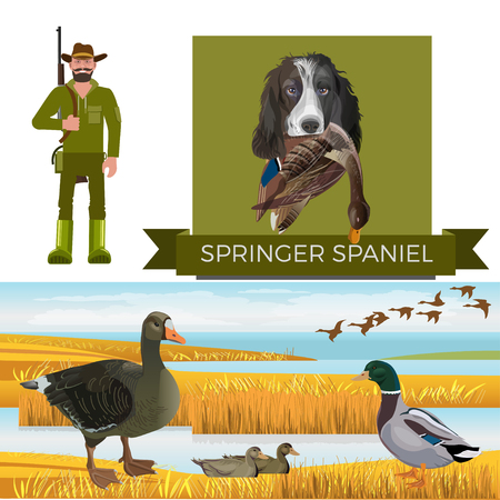Flushing dog. English springer spaniel. Waterfowl hunting. Feathered game. Vector illustration isolated on the white background
