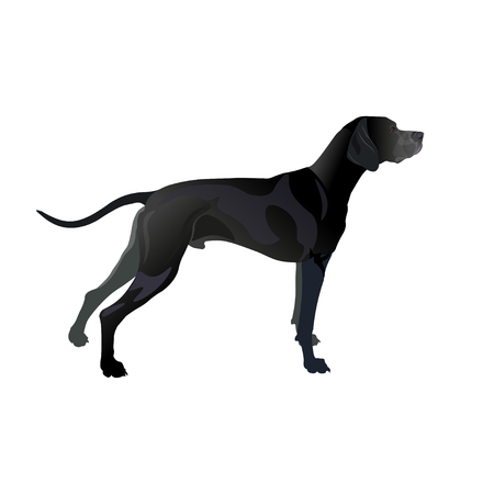 English pointer dog solid black coloring. Vector illustration isolated on white background
