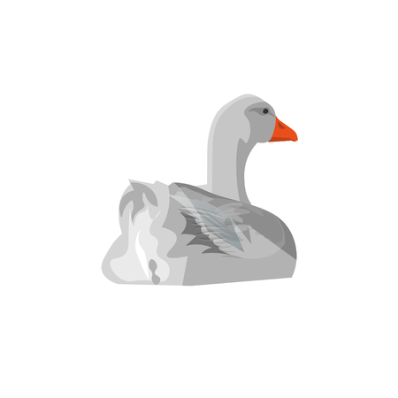 Grey domestic goose swimming. Back view. Vector illustration isolated on white background Çizim