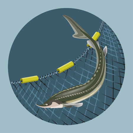 Sturgeon fish on the background of the marine nets. Vector illustration in a circle shape